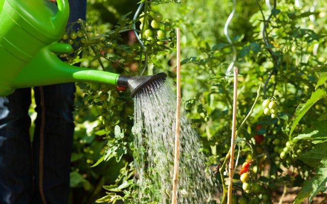 Использование перекиси водорода для растений