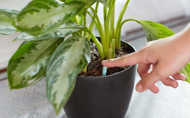 Сухие удобрения для комнатных растений