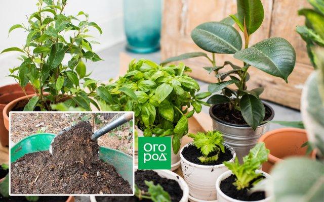 Органика для комнатных растений