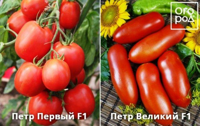 images%7Ccms-image-000046226.jpeg