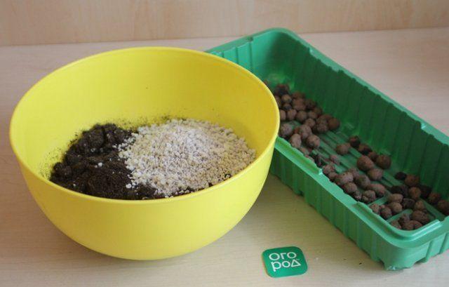 Подготовка почвы для укоренения сирени