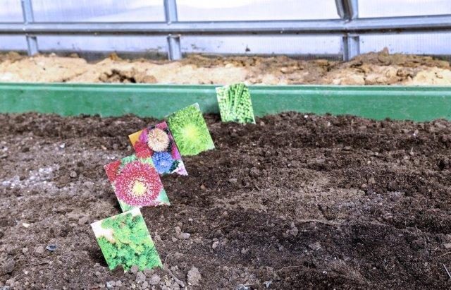 Посев семян в теплице