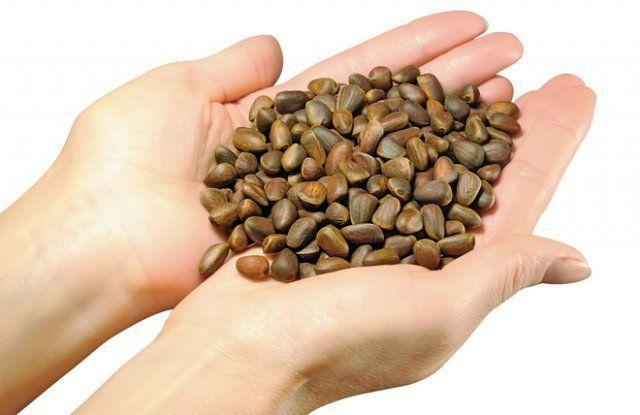 Семена сосны кедровой