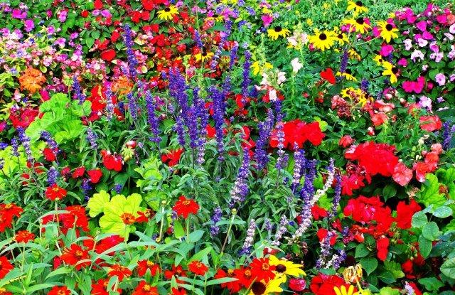 как сочетать растения на клумбе по цвету