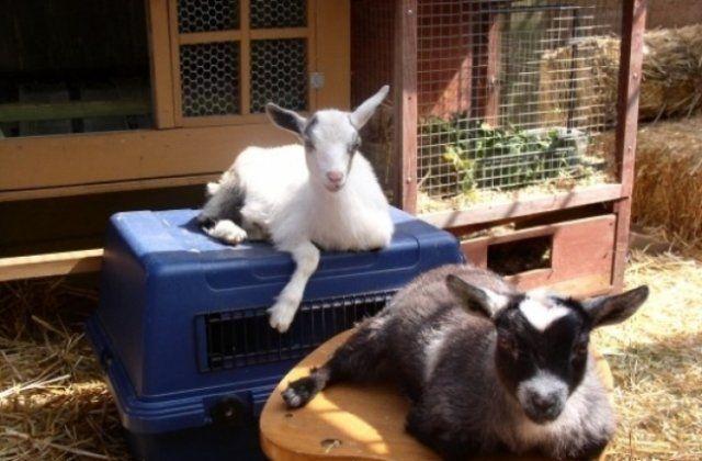 Домашние животные ферма