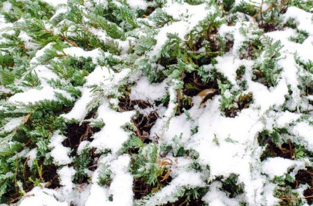 Цветник в снегу
