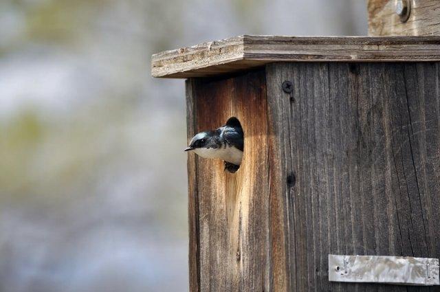 Птицы на участке