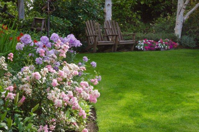 клумба из роз в зоне отдыха