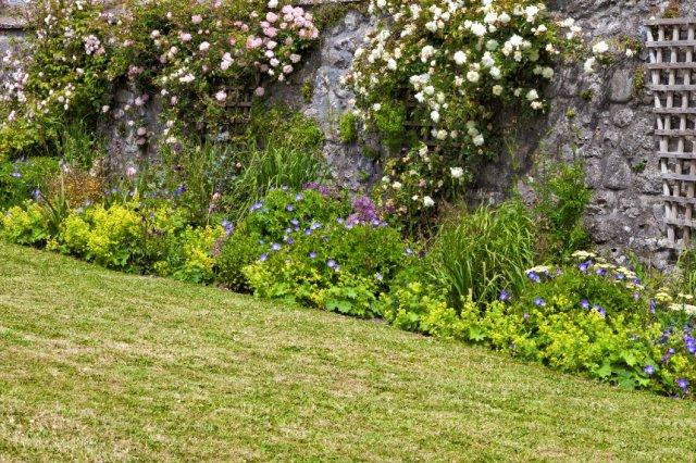 розы с травянистыми растениями