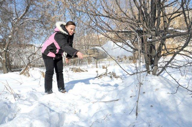 Снег для защиты растений