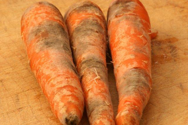 больная морковь
