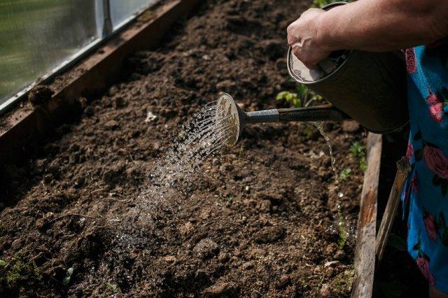 поливать грунт в теплице