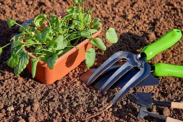 Когда высаживать рассаду в грунт