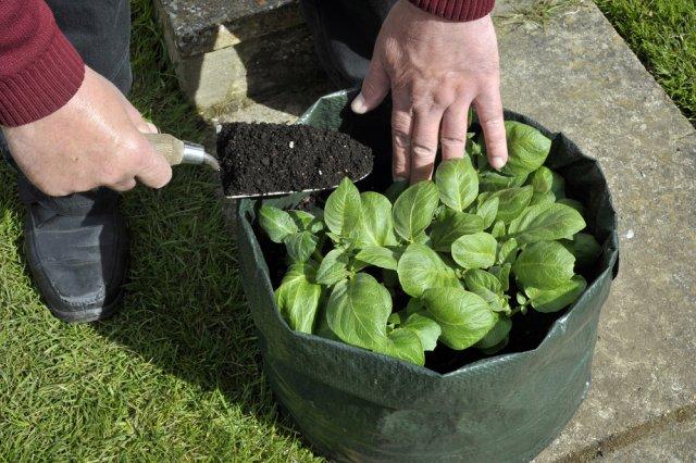 овощи в мешке