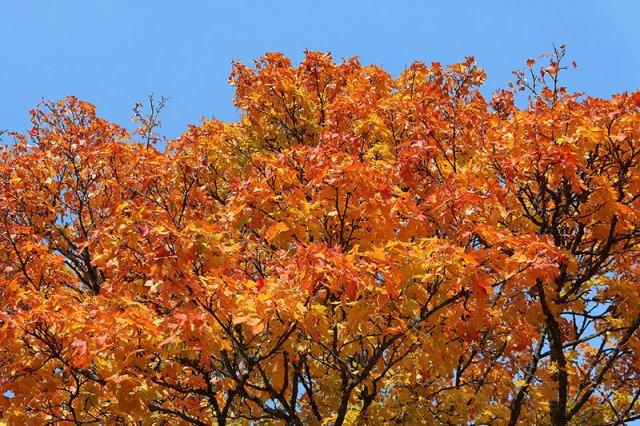 самые быстрорастущие деревья для подмосковья