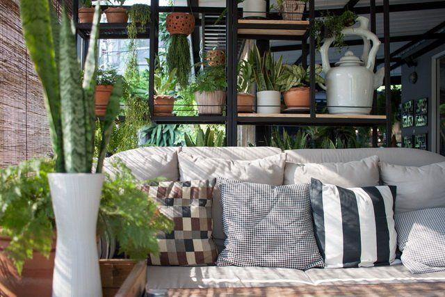 Домашние растения зонирование уют зона отдыха диван фото
