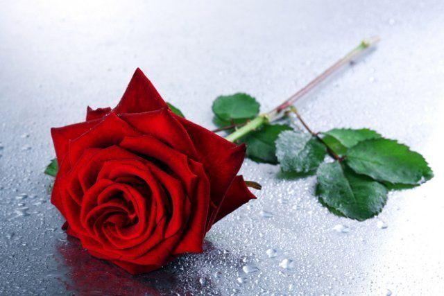 Срезанная роза