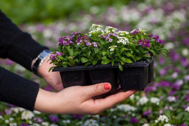 бесплатные растения