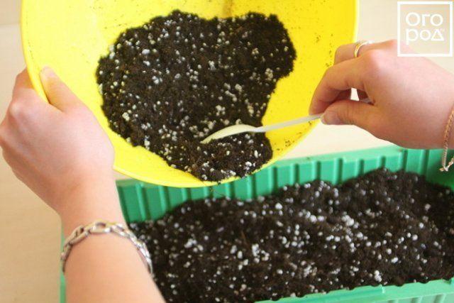 Почва для черенков сирени
