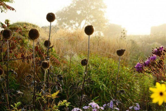 Выбор растений для сада новой волны