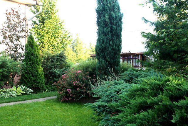 Высокорослые деревья и кустарники в дизайне сада