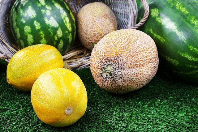 Melons and watermelons in wicker oval basket on green background/арбуз и дыня