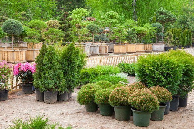 Посадочный материал (деревья и кустарники в горшках)