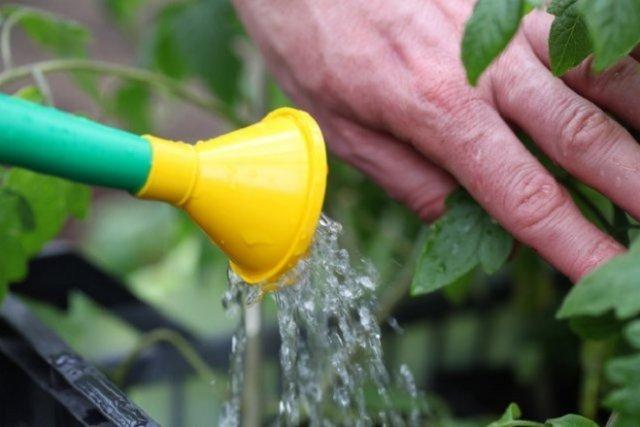 Полив растений в открытом грунте
