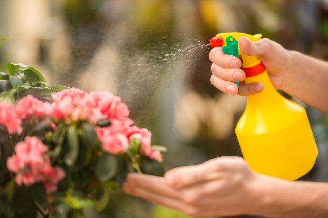 Male florist spraying flowers in flower shop.