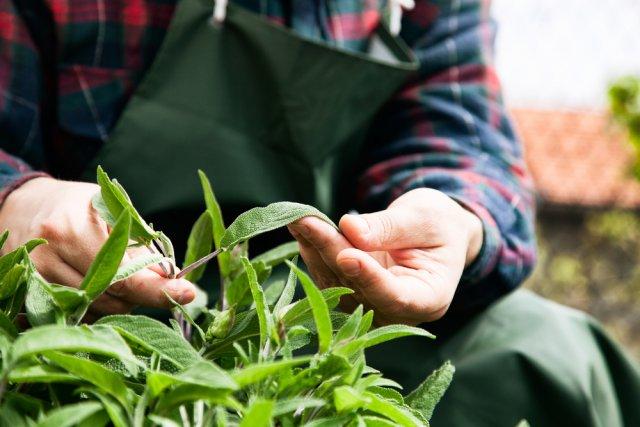 Изучение растения