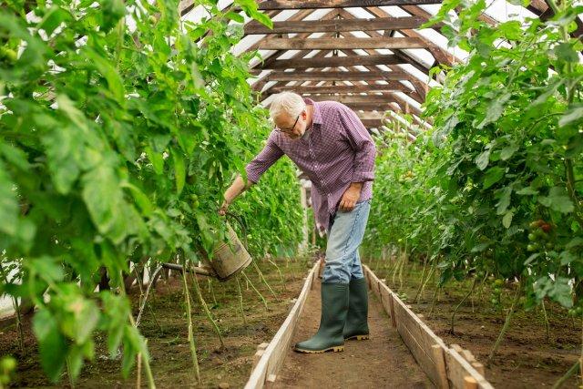 Подкормка растений кока-колой