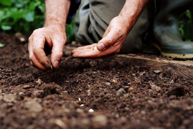 Что садить после капусты