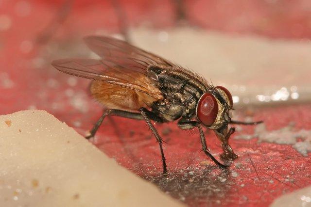 Откуда в квартире появляются мухи
