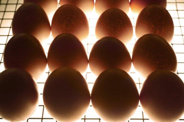 Яйца в инкубаторе