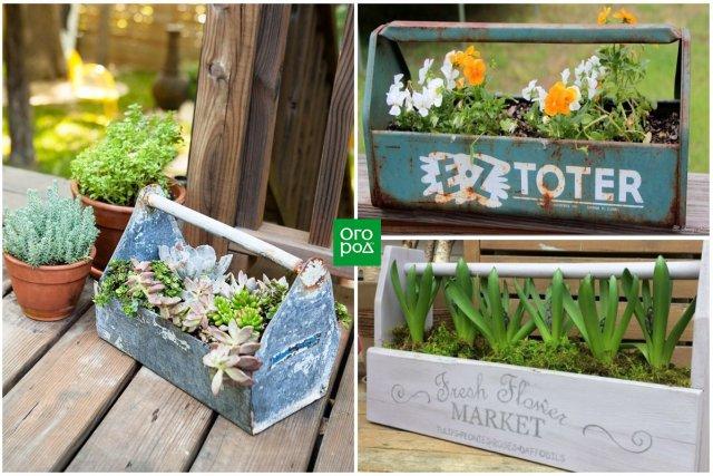 растения в ящике с инструментами
