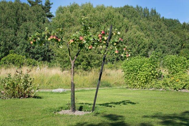 Подпорка деревьев