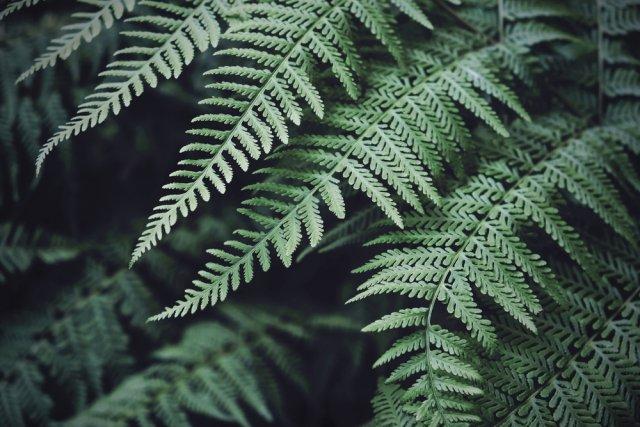папоротник листья