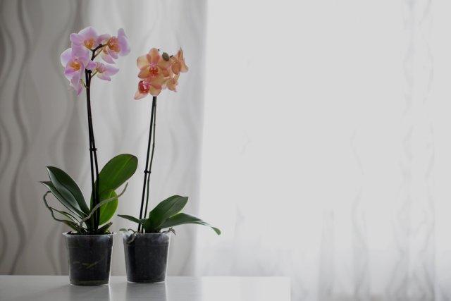Орхидеи в комнате