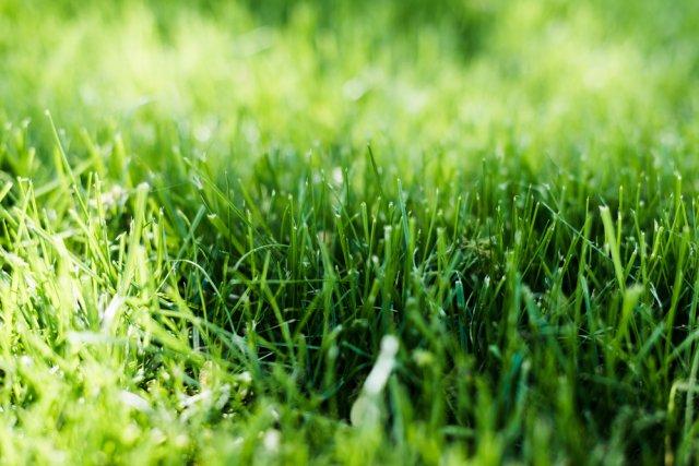 Зеленая трава под солнцем