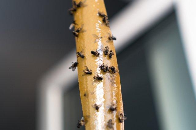 липкая ловушка для мух