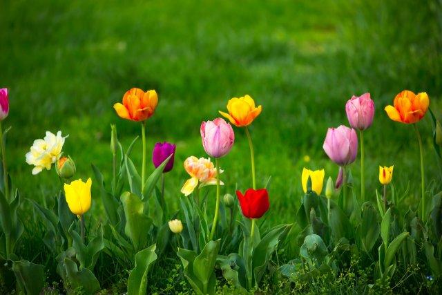 Цветы на газоне
