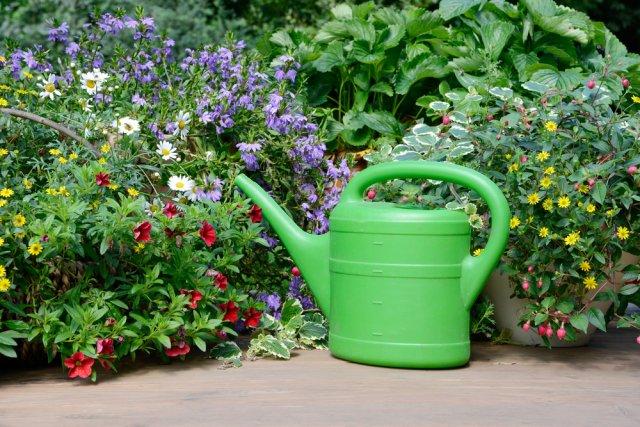 полив и подкормка чубушника