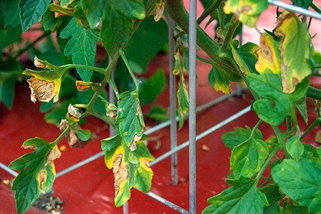 Почвопокровные растения и невысокие цветущие многолетники для сада 53