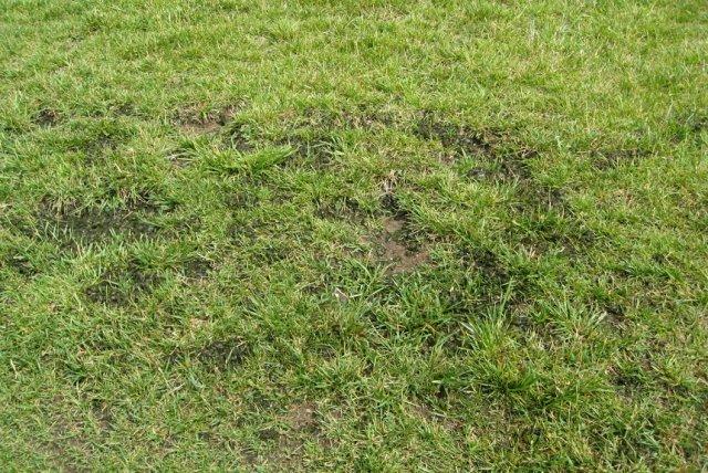 водоросли на газоне