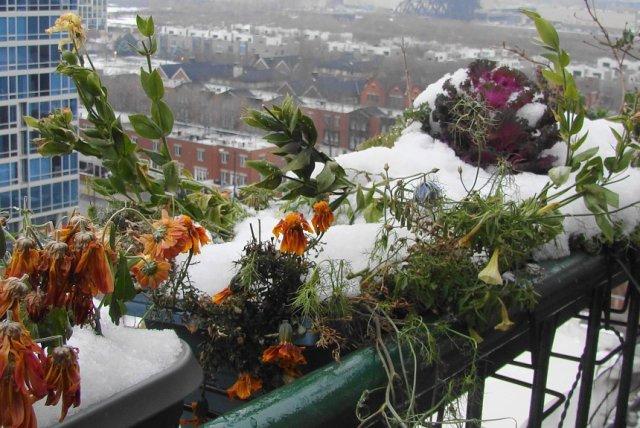 цветы на балконе в снегу
