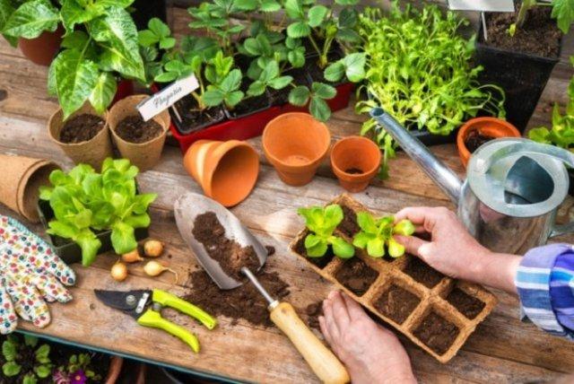 Огород на балконе: во что сажать овощи в квартире