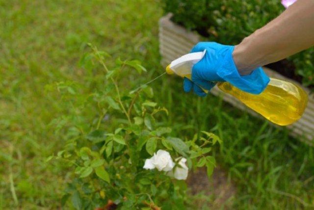 пестициды для ЛПХ