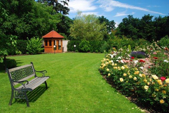 розы рядом с газоном и садовой дорожкой