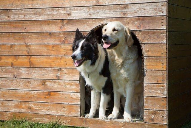 Две собаки в большой будке