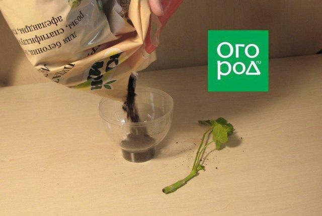 почва для пеларгонии